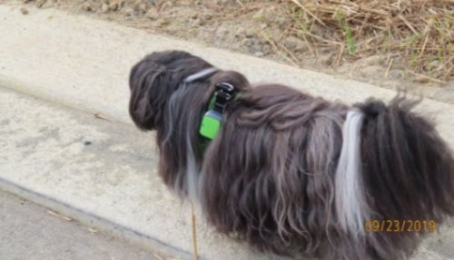 Pet Tracker With Gps photo review