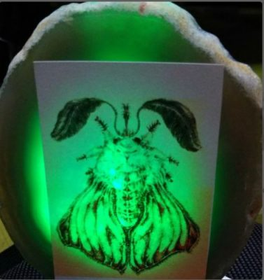 Creative Wooden Table Lamp Dog Paw Bedroom Decoration Night Light photo review